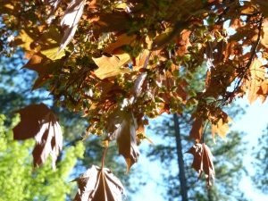 sun-dappled leaves